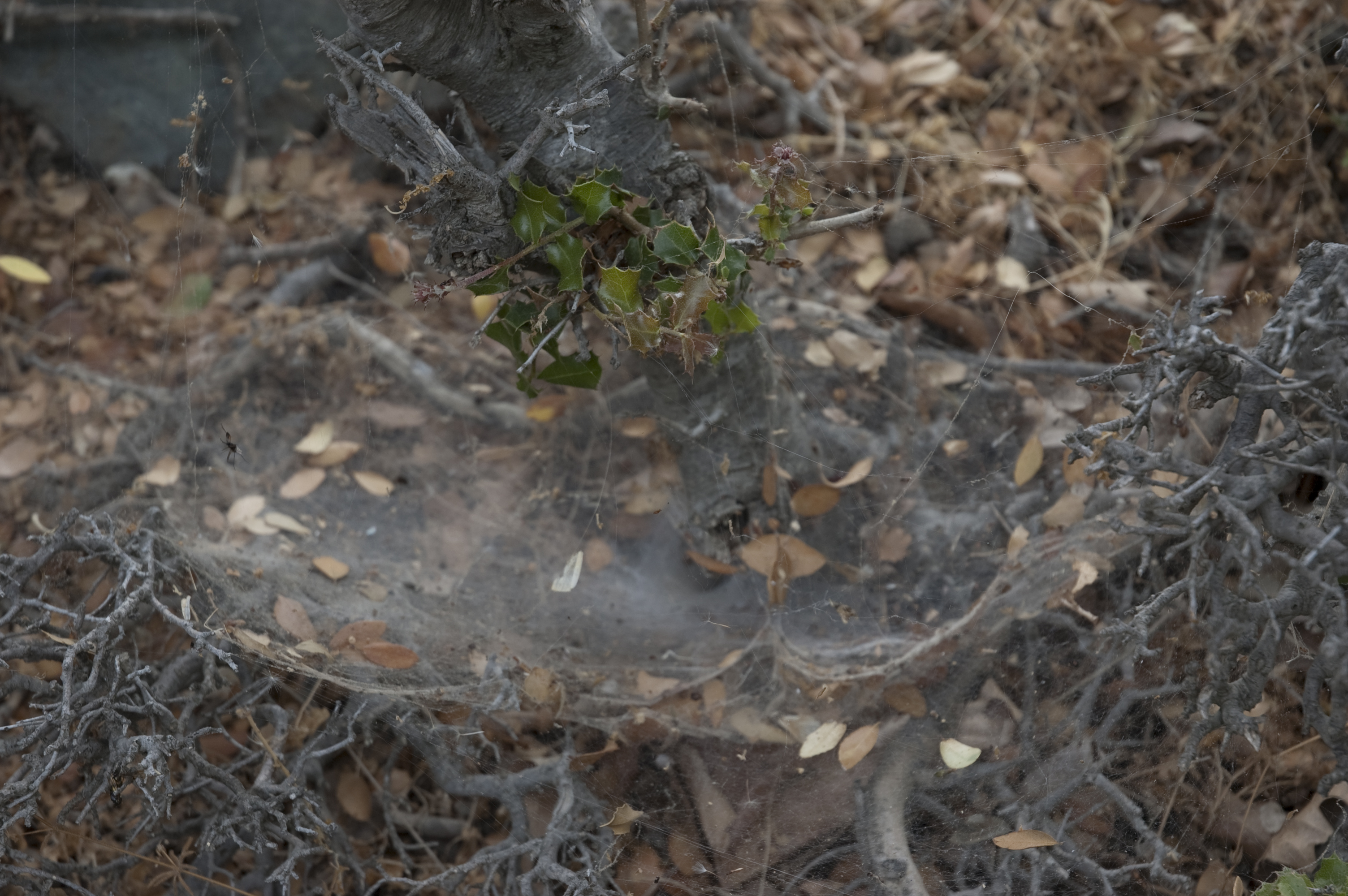 One of the many spider dens that are all around the site